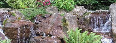 HOA landscaping